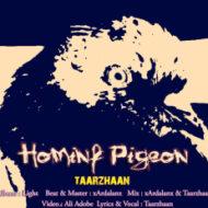 Taarzhaan – Homing Pigeon